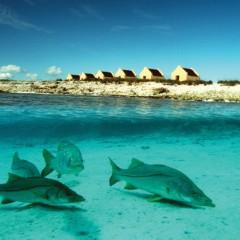 Mar do Rio em Bonaire